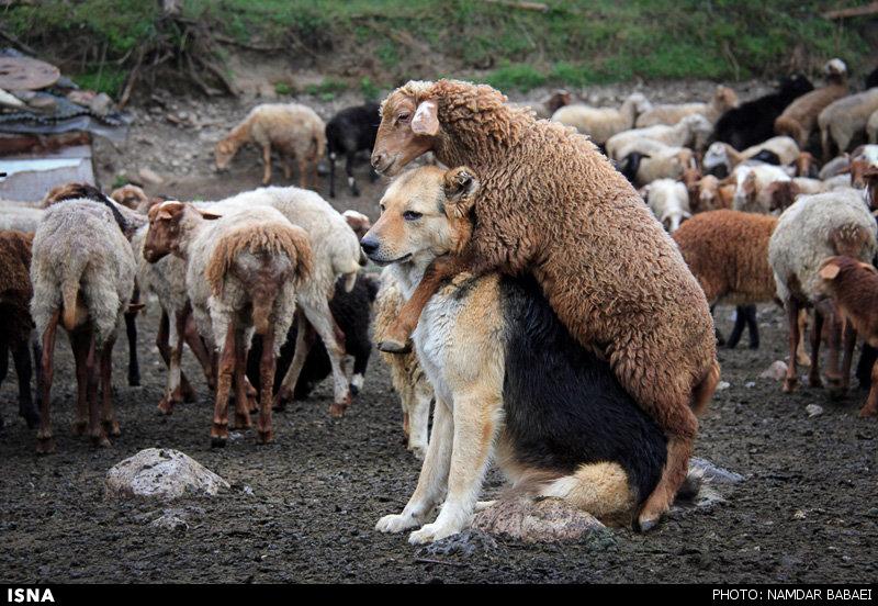 عکس حیوان جهنده
